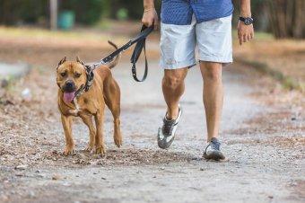 Tetemes büntetéseket róttak ki az agresszív kutyák nem szabályszerű tartása miatt