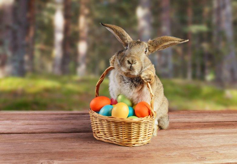 Hogyan hódította meg a Kárpát-medencét a húsvéti nyúl? Ünnepi szimbólumokról a néprajzkutatóval