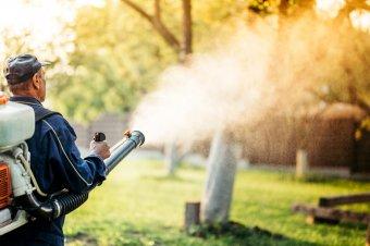 Ekkor tartanak szúnyogirtást Sepsiszentgyörgyön