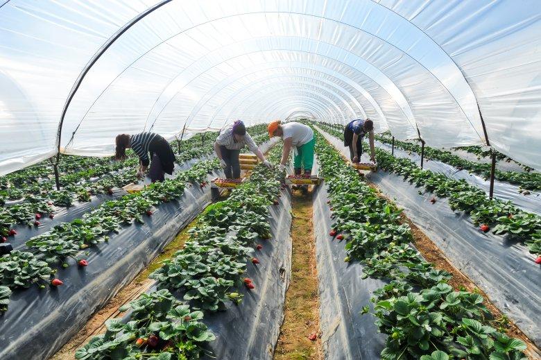 Kovászemberek kellenek a jó gazdálkodáshoz – a Maros megyei gazdakörök példája új megvilágításba helyezhetné a gazdálkodást