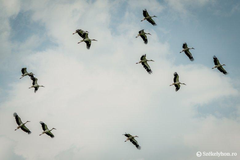 Megérkeztek az első gólyák Székelyföldre