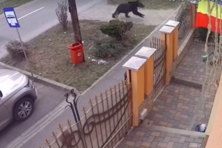 Medve szaladt egy segesvári utcán