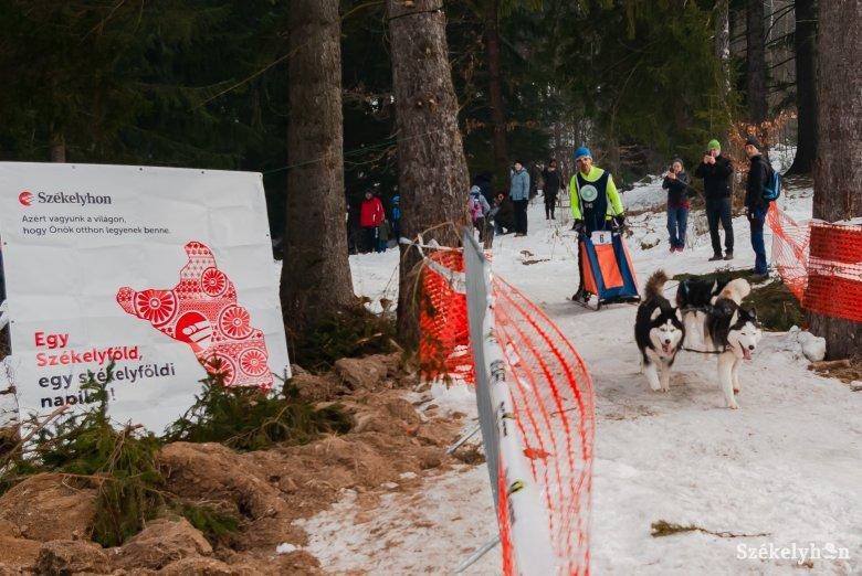 Kihívás volt a kutyafogathajtóknak a tusnádfürdői megmérettetés