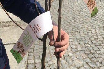 Több ezer őshonos gyümölcsfát ültettek