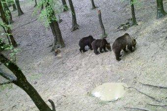 Fényképpel nyomatékosítják, csak óvatosan, mert medvék vannak