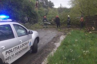 Fákat döntött ki a viharos szél