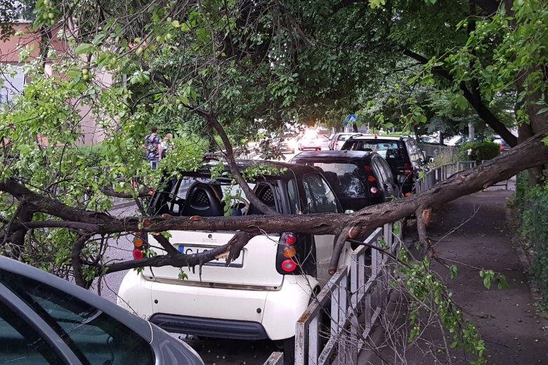 Több mint kétszáz fát döntött ki a vihar országszerte