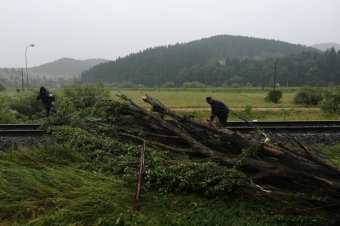 FRISSÍTVE – Sínekre dőlt fák miatt leállt a vasúti közlekedés Hargita megyében, a délelőtti órákban újraindult a forgalom