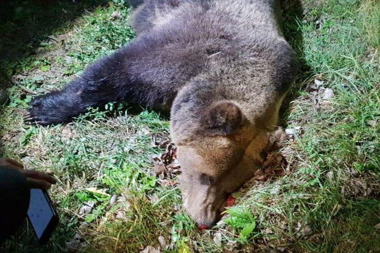 Kerekek alá került a medve, a helyszínre sietett a prefektus