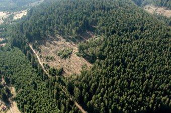 """Zavarja Bukarestet a """"túlzott"""" magyar erdőtulajdon"""