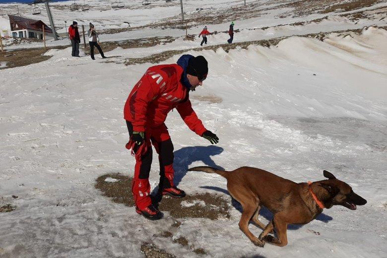 Nagyban segítik a hegyimentők munkáját a nyomkövetésre kiképzett kutyák