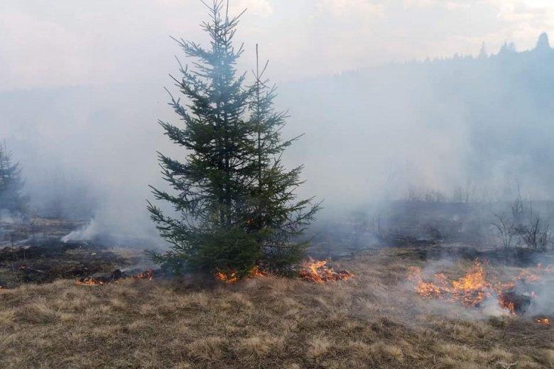 Az erdőt fenyegeti az elharapózó avartűz