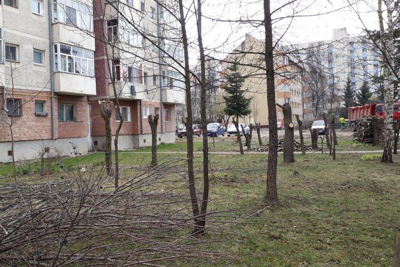 Következménye van annak, ha metszés címén lakóövezeti fákat csonkítanak meg