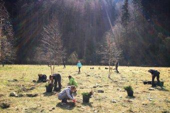 Tölgy- és bükkfacsemetéket ültetnek Székelyhodoson