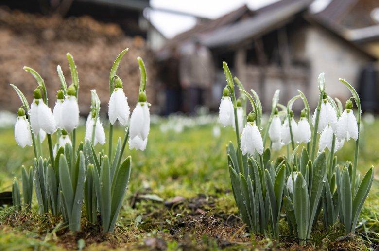 Egy kis tavaszt is tartogat az elkövetkező két hét időjárása