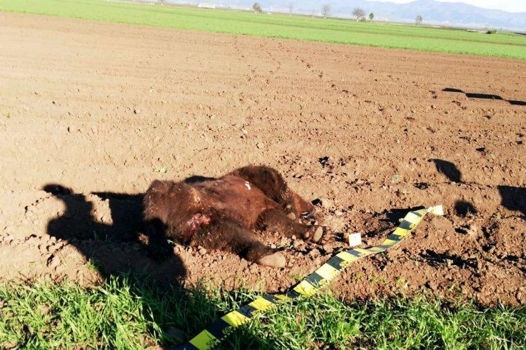 Elpusztult medvét találtak