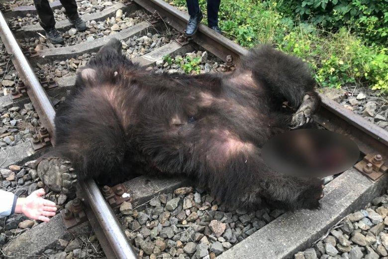 Medvét ütött el a vonat Alsóboldogfalvánál