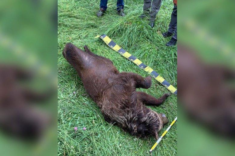 Vonat gázolt el egy medvét