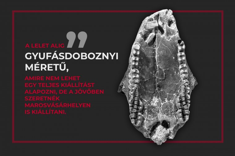 Eddig ismeretlen, a dinoszauruszok korában élt emlős maradványait azonosították