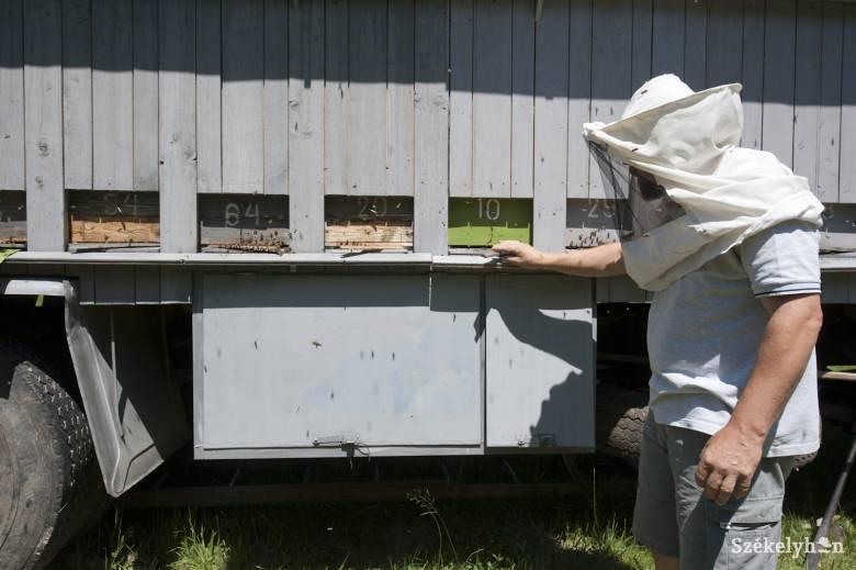 Méhek és emberek egymásra utalva