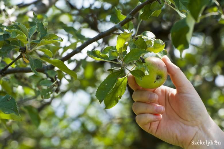 Növényvédelmi szempontból a nyár legkritikusabb időszaka a mostani