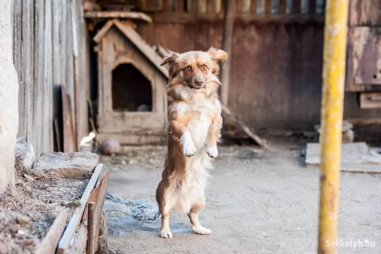 Büntetik az oltást visszautasító kutyatulajdonosokat