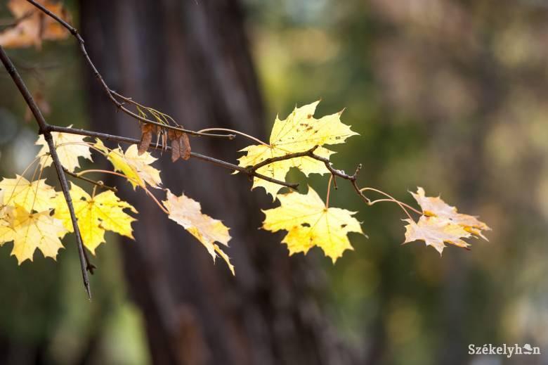 Melegre és kevés csapadékra számíthatunk az első őszi hónapban