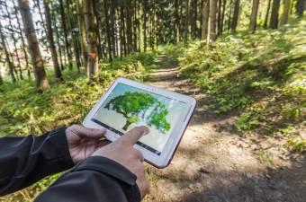 Ne tehessék pénzzé az illegálisan kitermelt fát – Hamarosan működésbe lép a faanyag útját követő rendszer