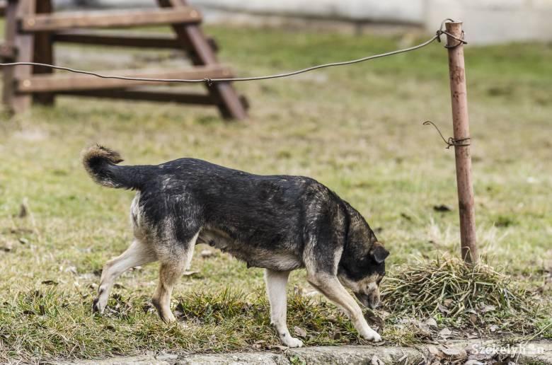 Tizenhétezer eurós kártérítést szabtak meg egy kóbor kutya által megharapott tízéves kislány perében
