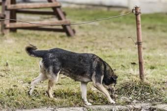Tizenhétezer eurós kártérítést szabtak meg egy kóbor kutya által megharapott kislány perében