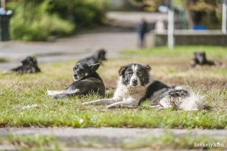 Egyre jobban zavarják a lakókat a városközpontban tanyázó gazdátlan kutyák