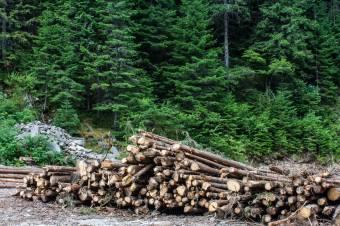 Bűncselekménynek minősül az illegális fakivágás az új erdészeti törvény szerint