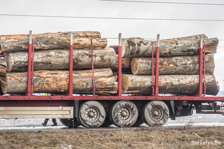 Házkutatások törvénytelen fakitermelés gyanúja miatt