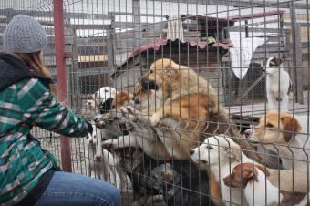 Menhelyhiány akadályozza a hatékony állatvédelmet