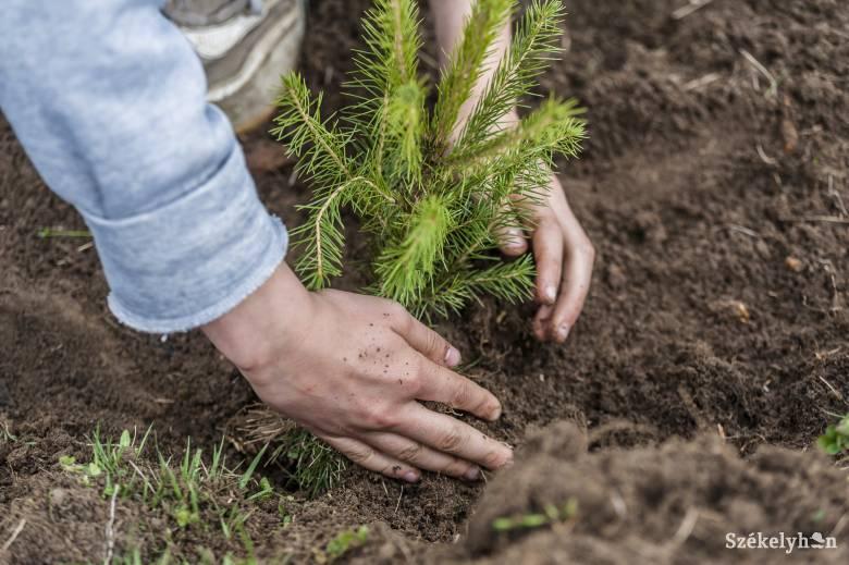 A lassú hóolvadás késlelteti a faültetéseket a Hargita megyei erdőkben