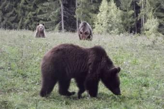 Ezrek csatlakoztak Borboly medveügyben benyújtott petíciójához