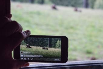 Eszköztelen küzdelem: Háromszéken hat medvére kaptak kilövési engedélyt, Hargita megyében egyre sem