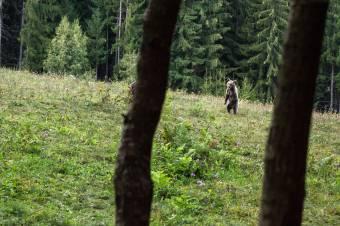 Gavrilescu: kilövik a Fogarason emberekre támadó medvét