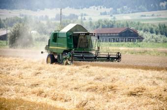 A kereskedők fölözik le a gabonatermés hasznát – Kifizetődőbbé lehet tenni a gazdák számára a búza és az árpa termesztését
