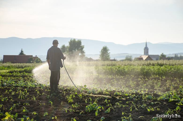 Sok helyen csapvízzel öntözik a veteményeseket, ez pedig fennakadást okoz az ivóvízellátásban