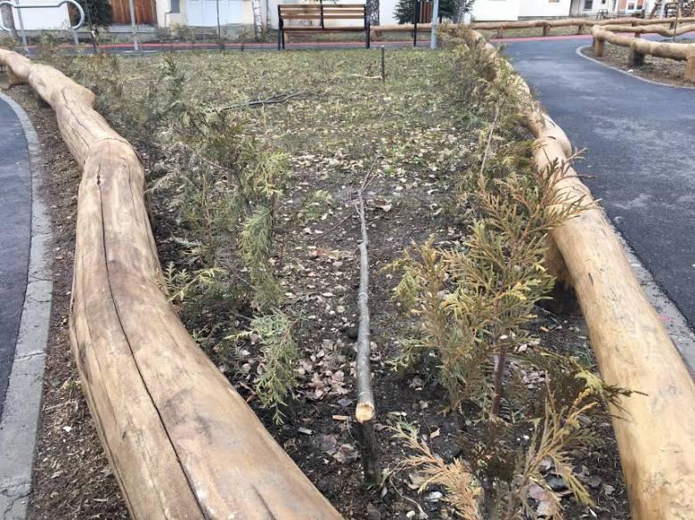 Ígérete szerint új fákat ültet a kitörtek helyébe a rongáló