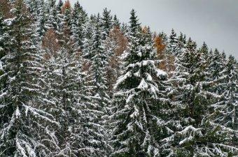 Az ortodox egyház is támogatja az ozsdolai közbirtokossági erdő ügyét