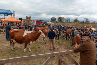 Az állatok legjavát sorakoztatták fel – sokan kilátogattak a Csíkszéki Gazdanapok csíkdánfalvi eseményeire