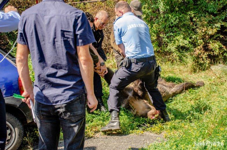 Medveproblémák: beperelte a környezetvédelmi minisztériumot a Zetelaki Területtulajdonosi Társulás
