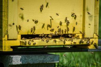Méhészeti támogatások: már számlákon a pénz