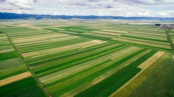 Nincs alternatívája a közös értékesítésnek a mezőgazdaságban