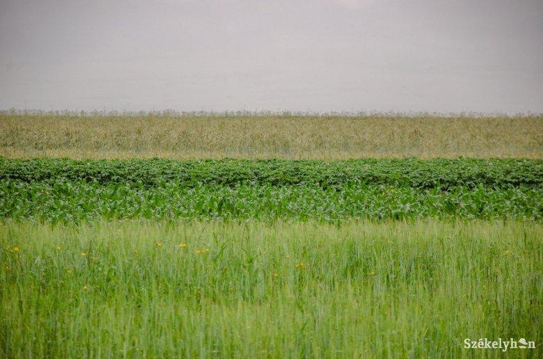 Szinte csak magukra számíthatnak a gazdák, ha a termény megvédéséről van szó