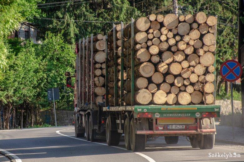 Képviselőház: tilos lesz rönkfát exportálni az Európai Unión kívülre