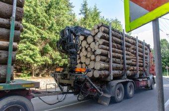 Megtiltaná a kormány a rönkfa exportját – valós segítséget várnak a faipari vállalkozók