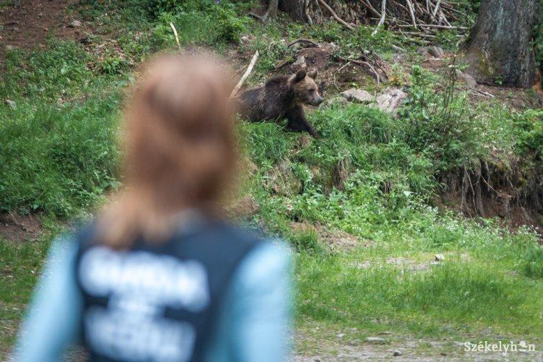 Medveveszélyre figyelmeztetnek Sugásfürdőn